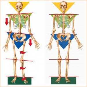 la bonne posture du squelette